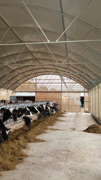 Tunnel droit d'élevage bovin
